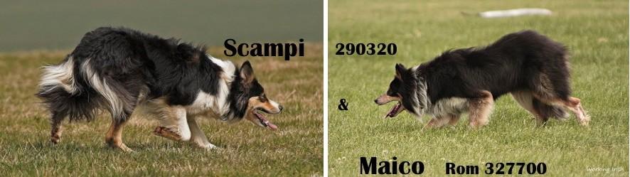 Maico Scampi